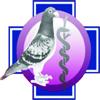 Dr. Raf Herbots duif markt