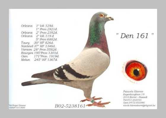 Etienne Pauwels Brieftauben markt Zuechter 96
