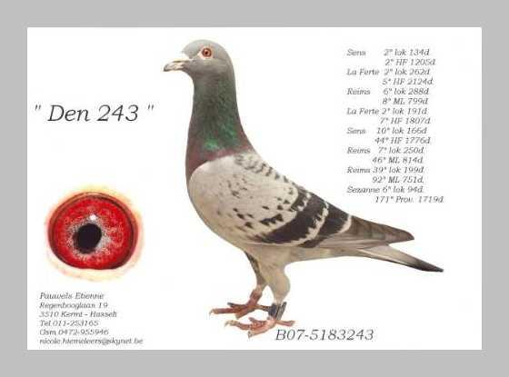 Etienne Pauwels Brieftauben markt Zuechter 994