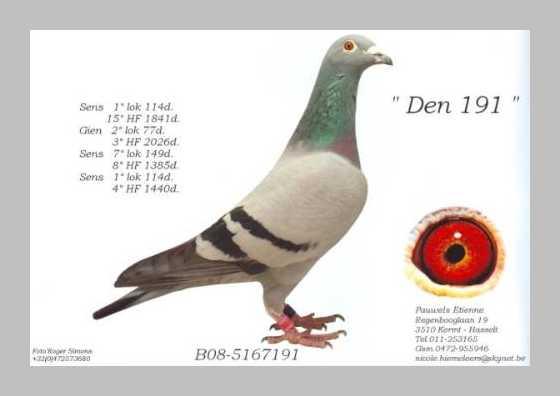 Etienne Pauwels Brieftauben markt Zuechter 996