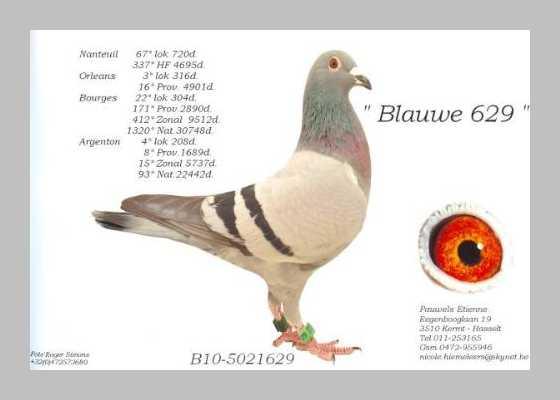 Etienne Pauwels Brieftauben markt Zuechter 998