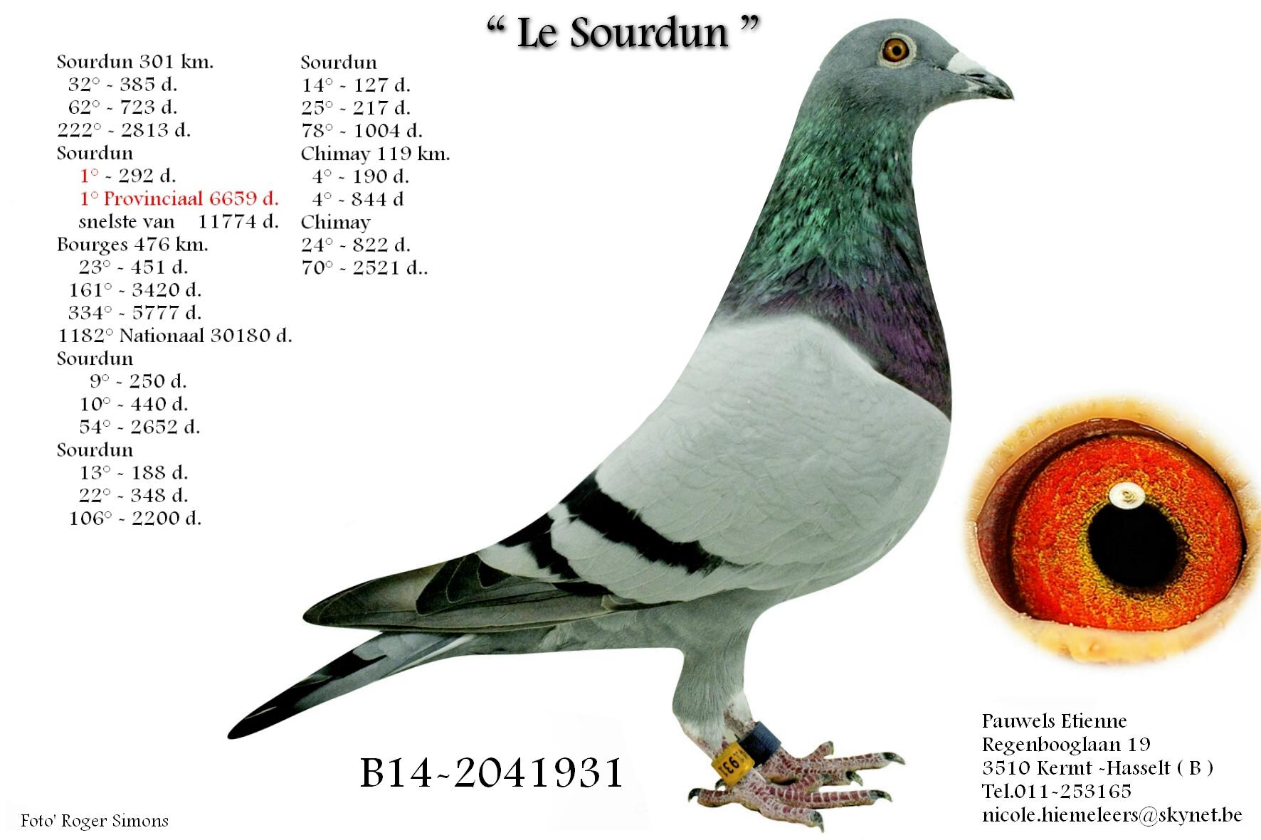 pauwels B14-2041931