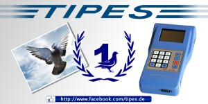 tipes products pigeon market ONexpo 3