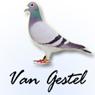 Gestel鸽子标志