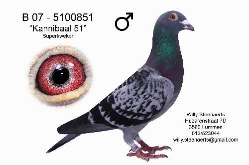 steenaerts kannibal 51