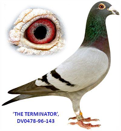 vangeel terminator