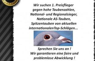 Wir suchen 1. Preisflieger, AS-Tauben, Spitzentauben...