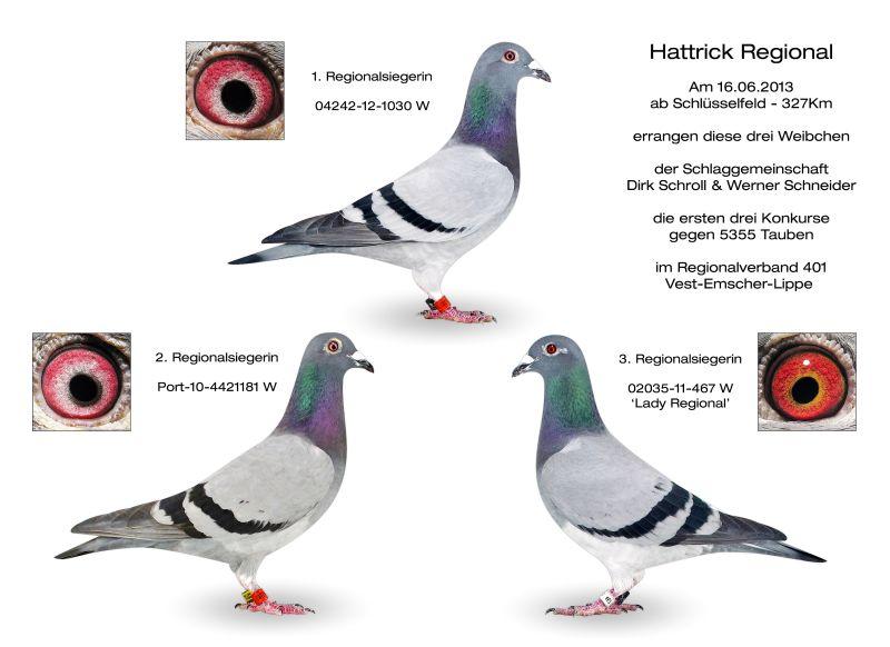 schroll Hattrick_Regional